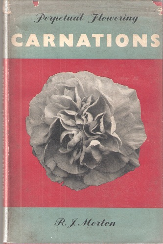 Image for Perpetual Flowering Carnations