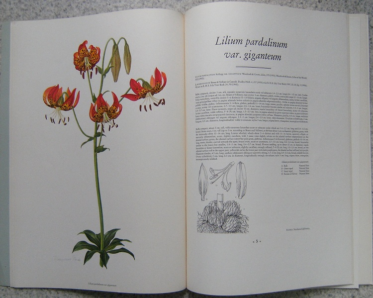 Image for A Supplement to Elwes Monograph on the Genus Lilium. PART IX