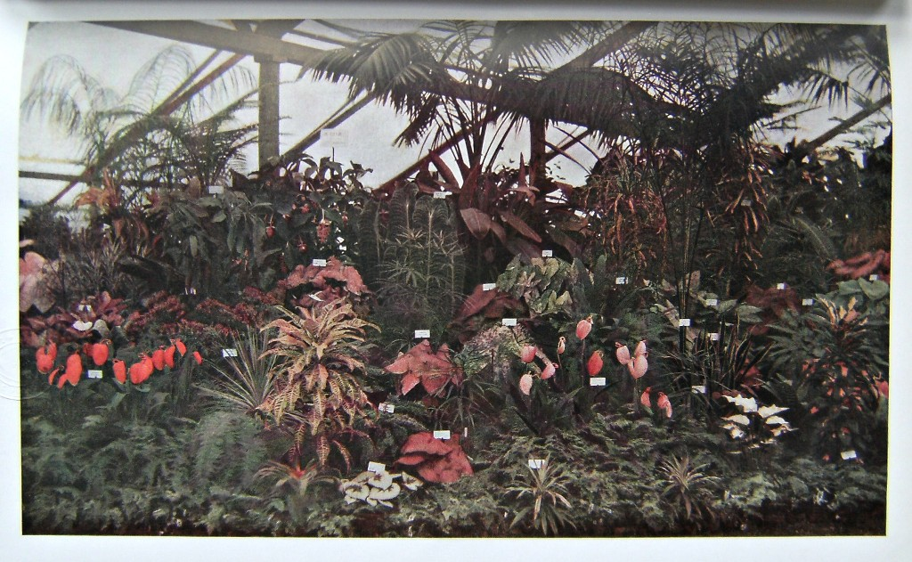 Image for The Horticultural Record, Consisting of Coloured and Half-tone Reproductions of the Most Interesting Flowers, Plants, Shrubs, Groups & Rock Gardens Exhibited at the Royal International Horticultural Exhibition 1912