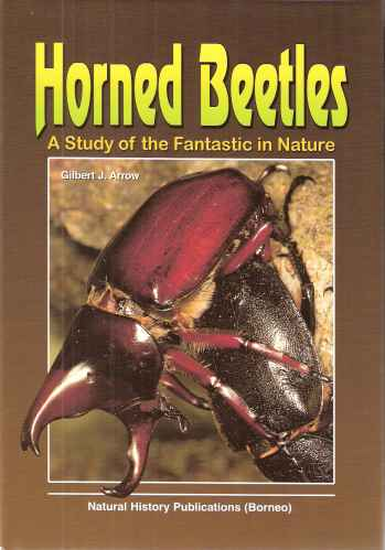 Image for Horned Beetles - a study of the fantastic in nature.