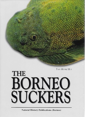 Image for The Borneo Suckers - a revision of the Torrent Loaches of Borneo. (Balitoridae : Gastromyzon, Neogastromyzon.]