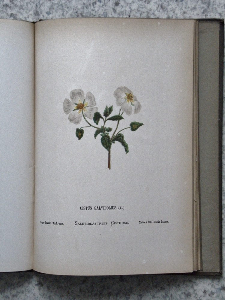 Image for Wild Flowers of the Holy Land - fifty four plates printed in colours, drawn and painted after Nature