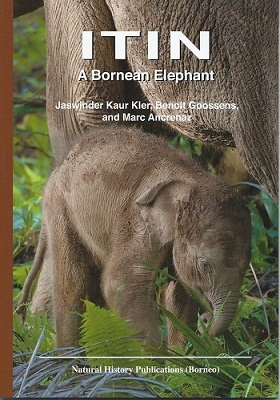 Image for Itin - A Bornean Elephant