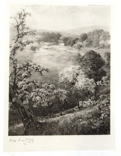 Image for British Trees, Drawn and Described [Special subscribers' edition]