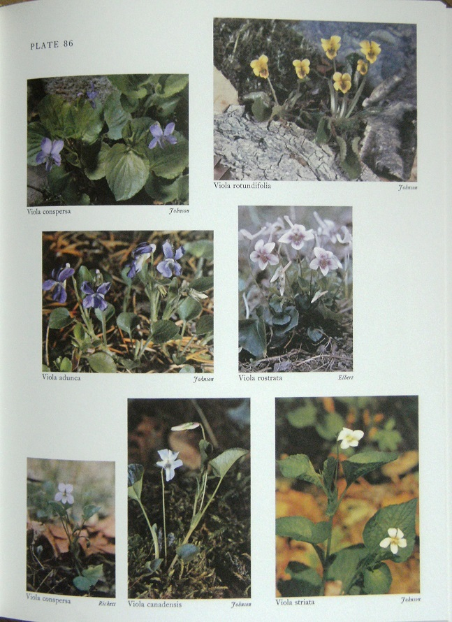 Image for Wild Flowers of the United States: Volume One - The Northeastern States (in two parts)