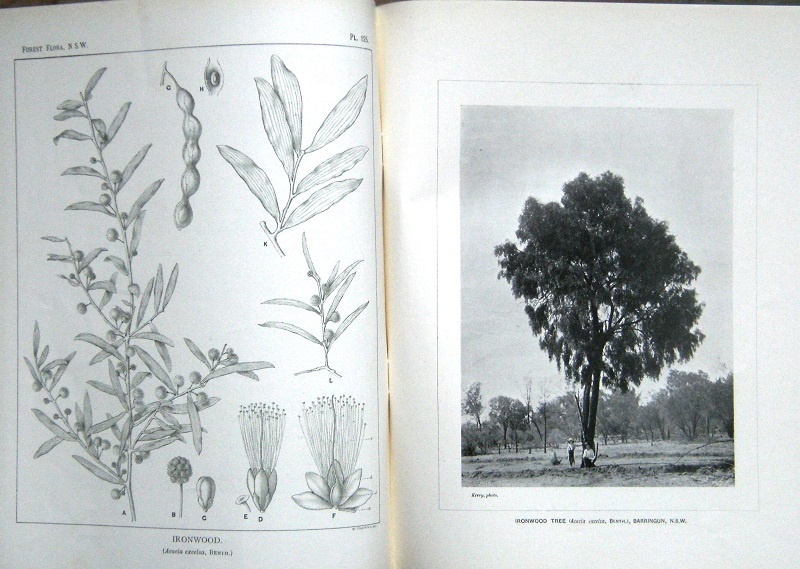 Image for The Forest Flora of New South Wales.  Volume 1 - Volume VIII (lacking two parts, otherwise a complete set)