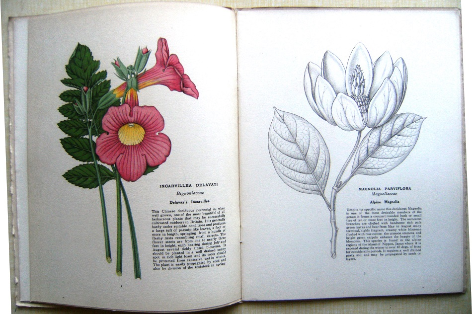 Image for Hardy and Half-Hardy Plants - a monthly magazine.  Volume 1 only (of 2)