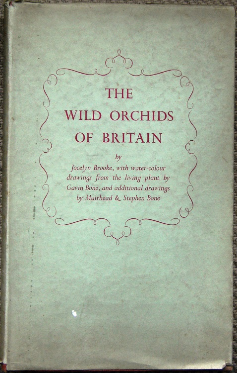 Image for The Wild Orchids of Britain