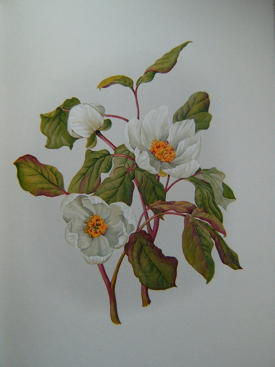 Image for A Book of White Flowers : Twenty-Four Paintings