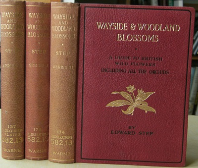 Image for Wayside and Woodland Blossoms - a guide to British wild flowers, including all the orchids