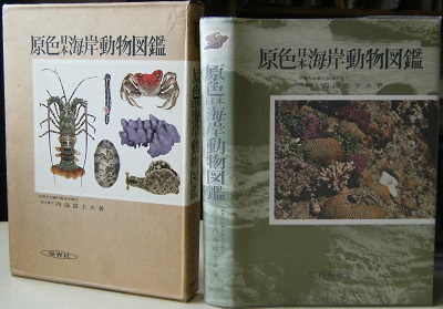 Image for Coloured Illustrations of Seashore Animals of Japan