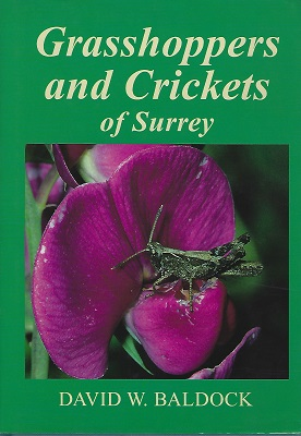 Image for Grasshoppers and Crickets of Surrey