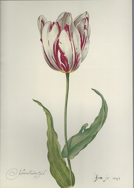 Image for Tulipiana Grafica
