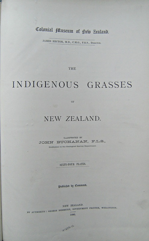 Image for The Indigenous Grasses of New Zealand