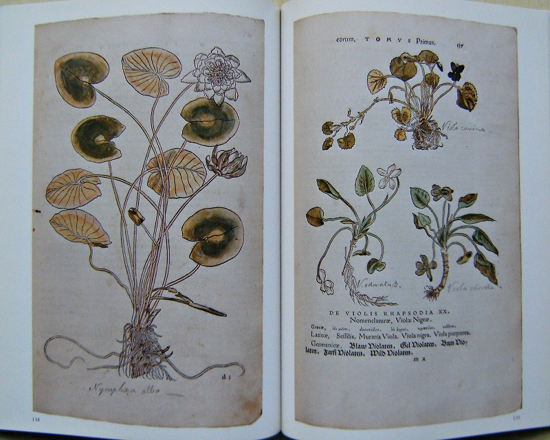 Image for The Illustrated Herbal