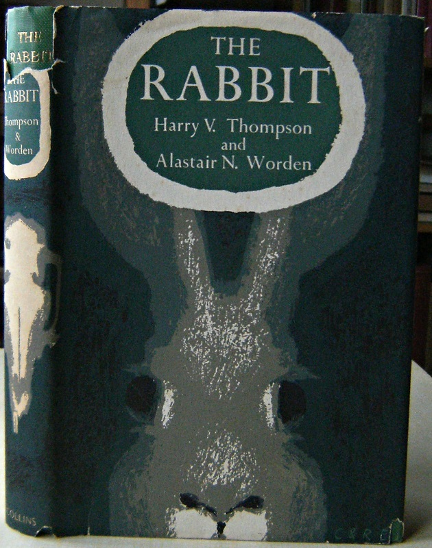 Image for The Rabbit