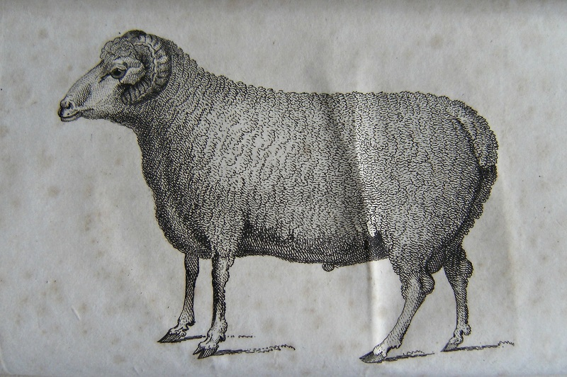 Image for Facts and Observations Relative to Sheep, Wool, Ploughs, and Oxen: in which the importance of improving the short-wooled breeds of sheep, by a mixture of the merino blood, is demonstrated from actual practice: