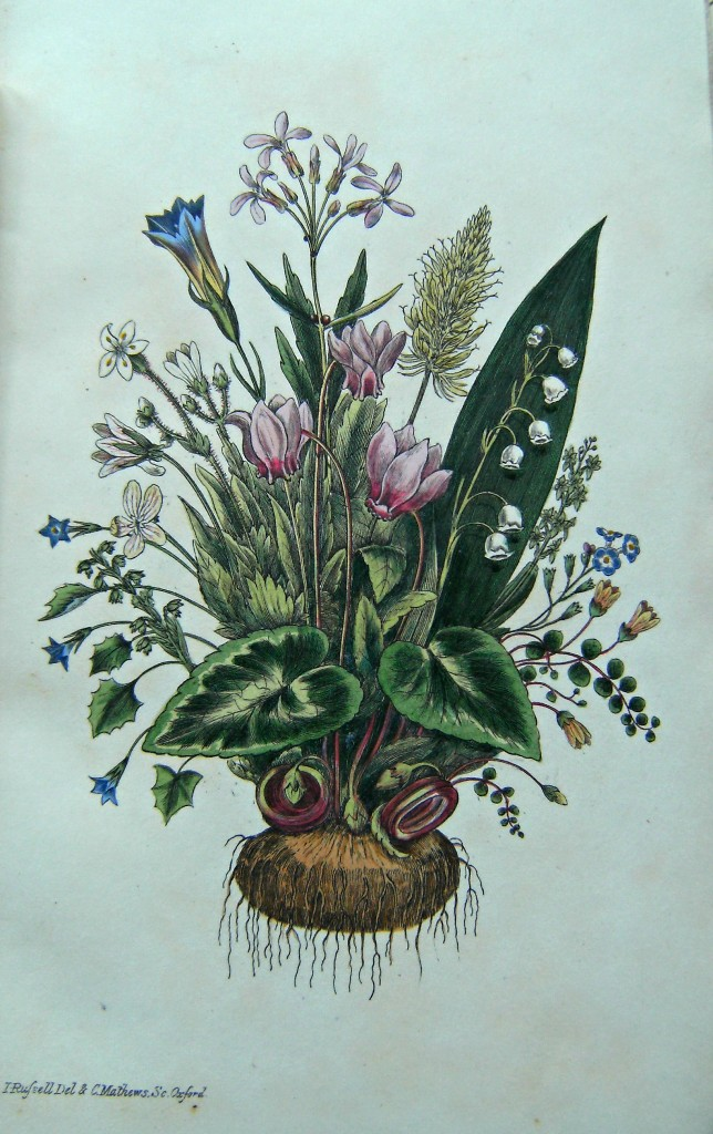Image for A Flora of Tunbridge Wells, being a list of indigenous plants within a radius of fifteen miles around that place. [Lindfield Borrer's copy]
