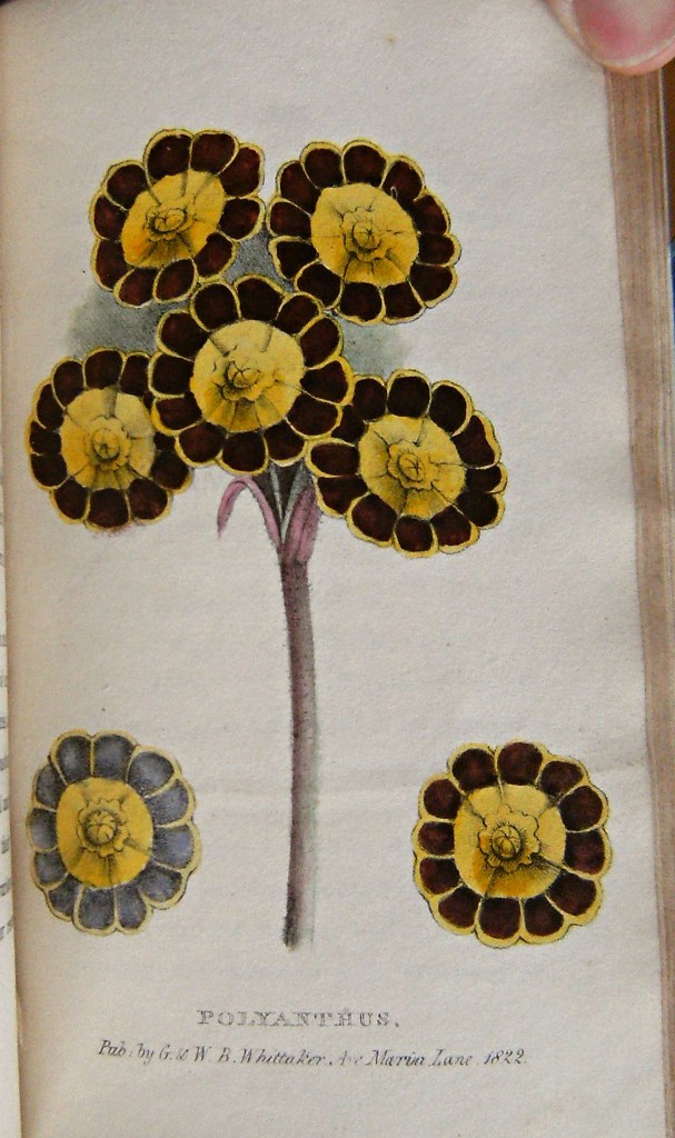 Image for A Concise and Practical Treatise on the growth and culture of the carnation, pink, auricula, polyanthus, ranunculus, tulip, hyacinth, rose and other flowers; including a dissertation on soils and manures and containing catalogues of the finest and most es
