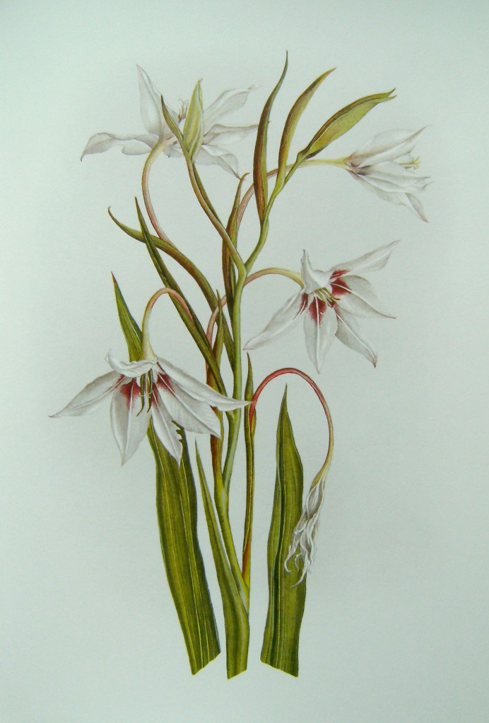 Image for A Book of White Flowers - Twenty four paintings