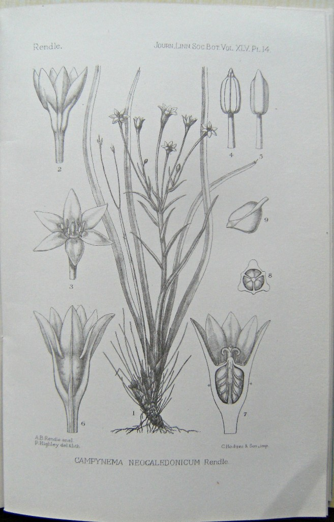 Image for A Systematic Account of the Plants collected in New Caledonia and the Isle of Pines by Prof. R.H. Compton, M.A., in 1914. Part I: Flowering Plants (Angiosperms)