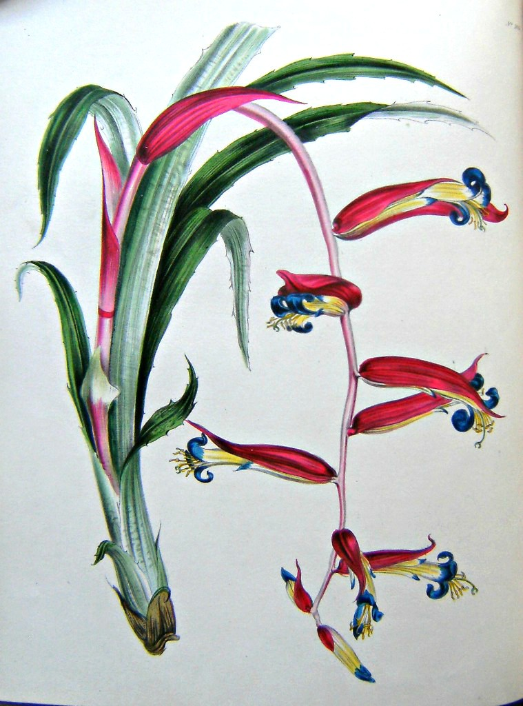 Image for The Floral Cabinet, and Magazine of Exotic Botany - 3 Volumes